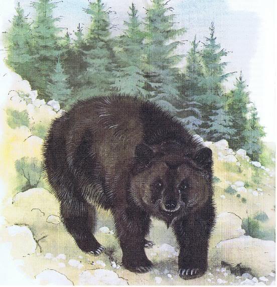 Atlas Bear Facts, Habi...