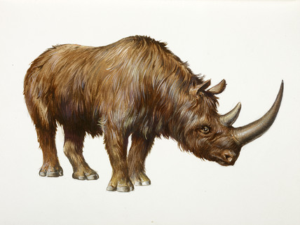 Woolly rhino Facts, Habitat, Pictures and Range