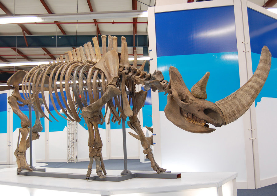 The Real Nature of the Fossil Record  The Institute for