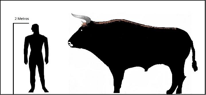 aurochs facts habitat pictures subspecies and diet