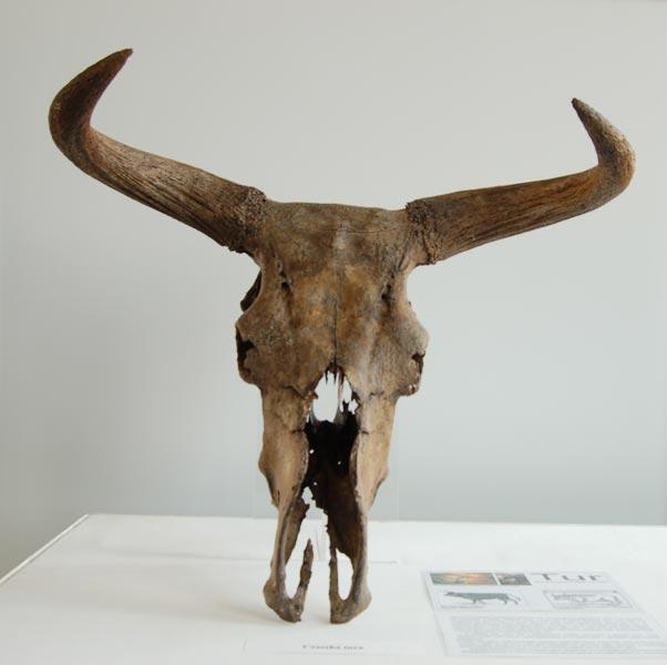 aurochs extinct animals