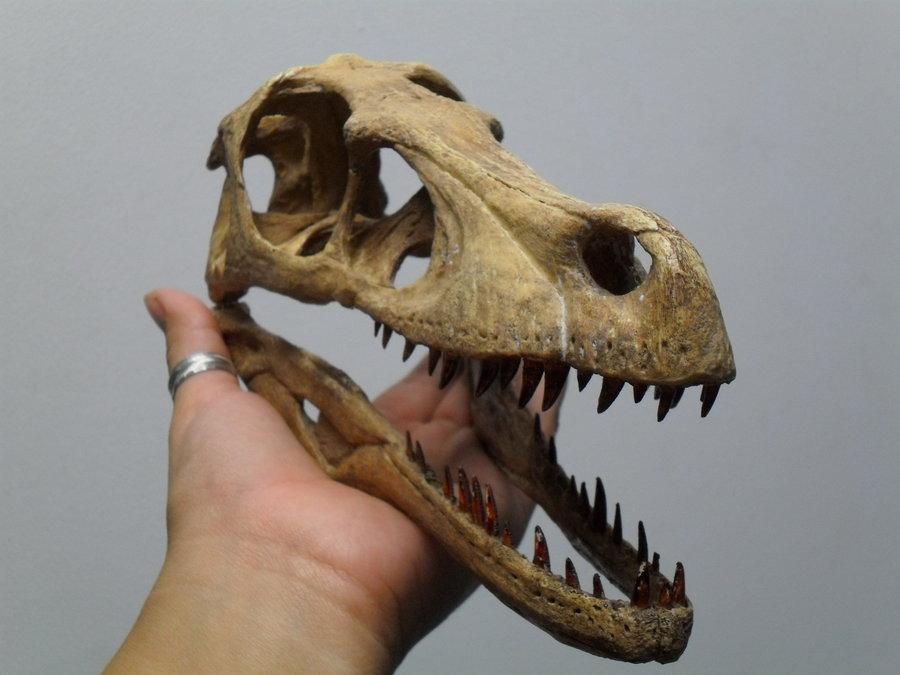 Velociraptor | Extinct Animals