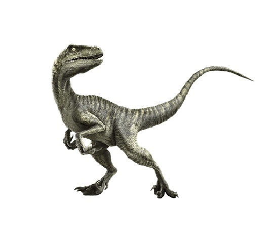velociraptor facts habitat pictures and diet