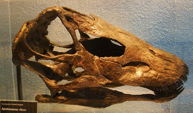 Dinosaurs Era Apatosaurus | Extinct ...