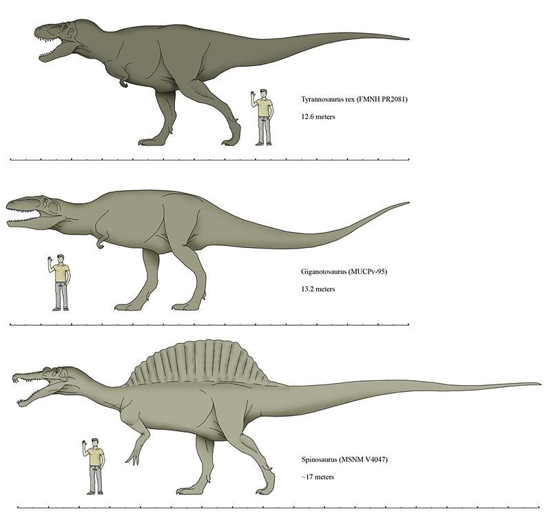 Spinosaurus Vs T Rex Vs Giganotosaurus | www.pixshark.com ...