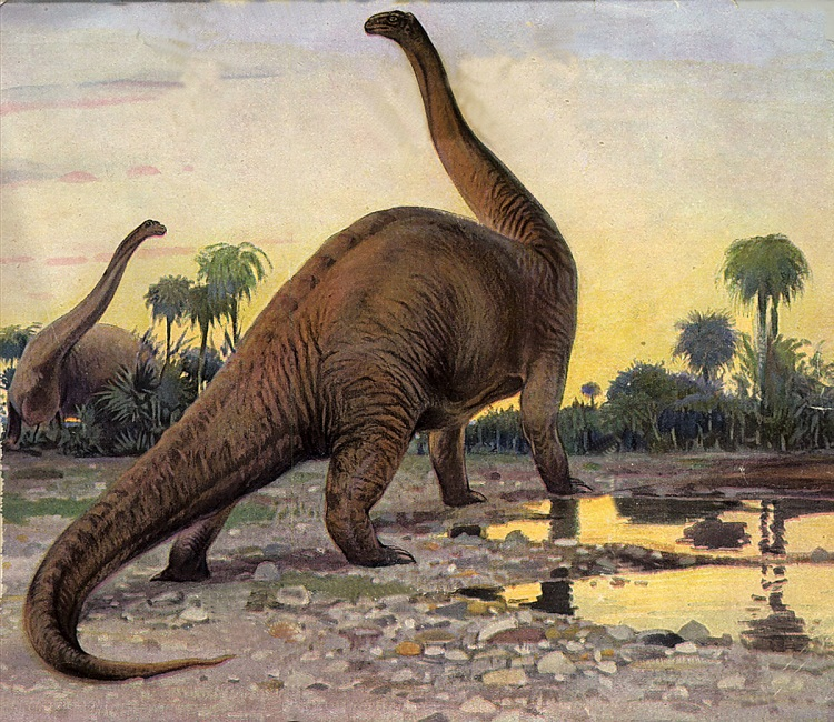 Brontosaurus Facts, Size, Fossil & Skeleton, with Pictures