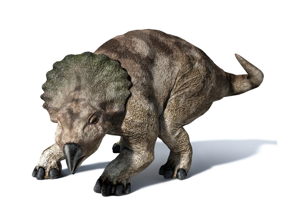 Protoceratops | Extinc...