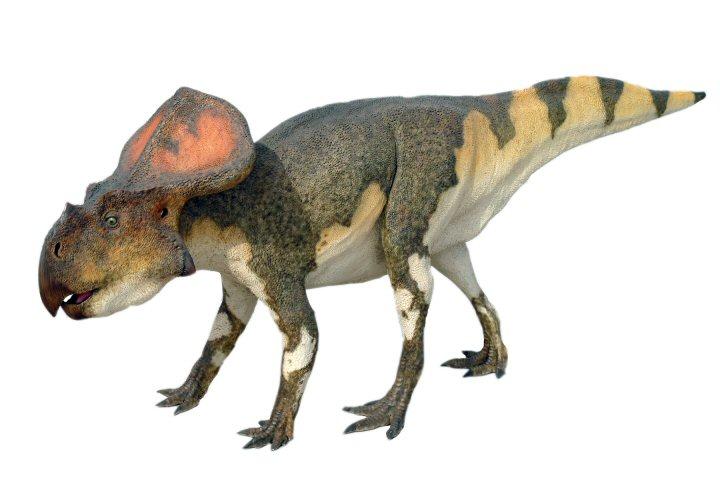 Resultado de imagem para protoceratops