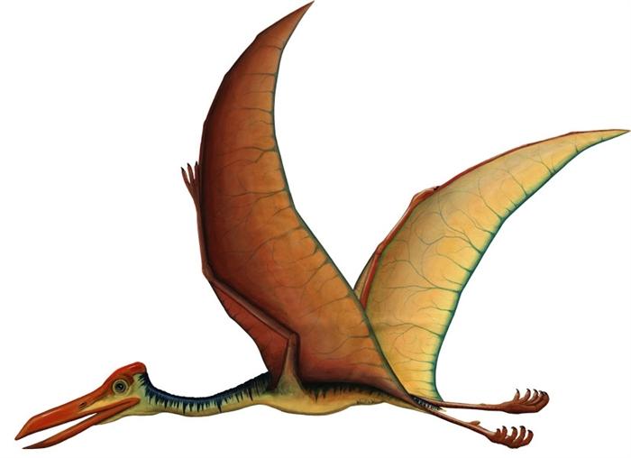 Quetzalcoatlus Dinosaur