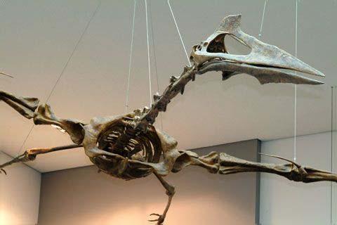 Quetzalcoatlus | Extin...
