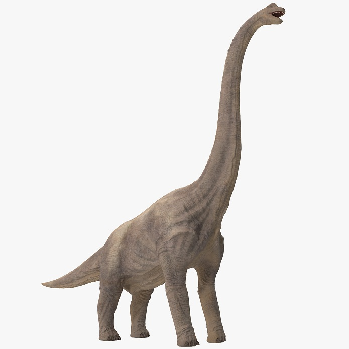 brachiosaurus facts etymology behavior characteristics and adaptation