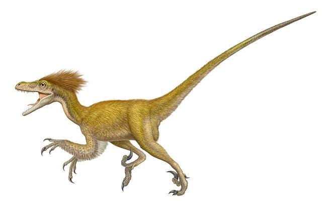 Dromaeosauridae  Wikipedia