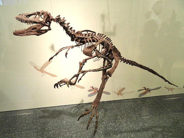 Sauroposeidon Skeleton