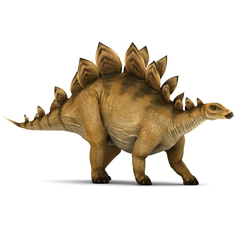 stegosaurus extinct animals clipart football player clipart feet hurting