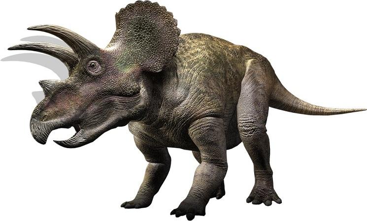 Triceratops | Extinct Animals