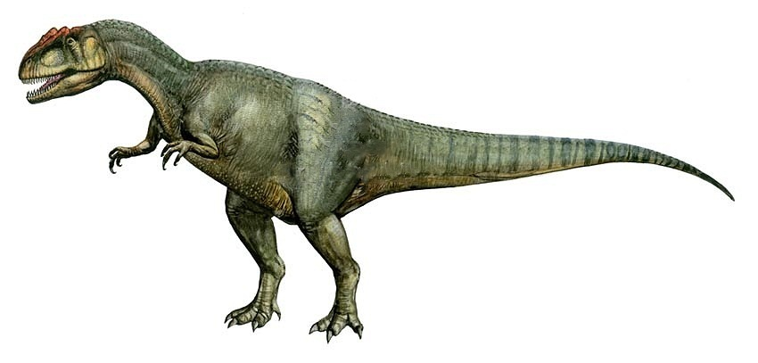 Allosaurus | Extinct A...