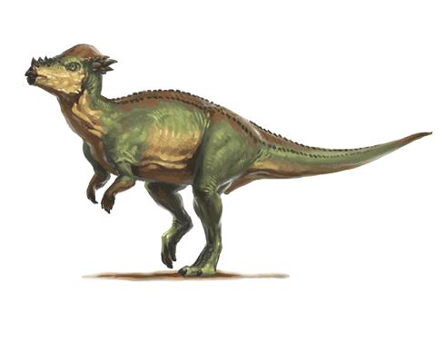 Pachycephalosaurus Facts, Habitat, Diet, Fossils, Pictures