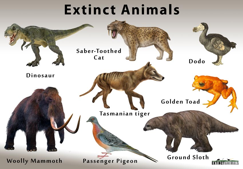 extinct species animals extinction definition gone earth humans there know dinosaurs future
