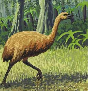 Moa Extinct Animal