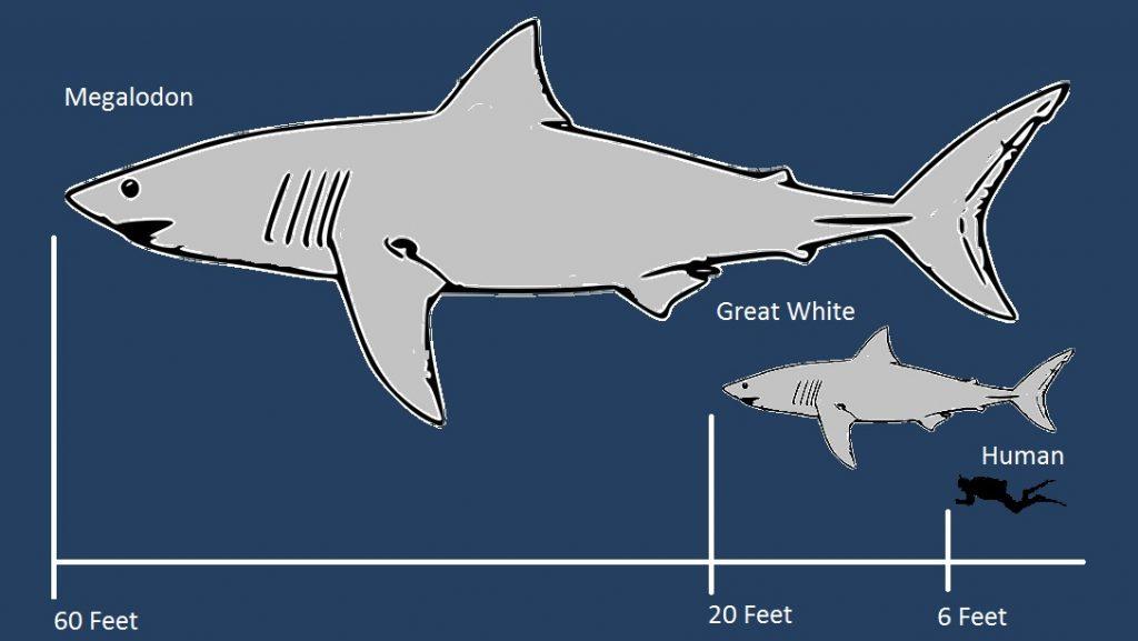 Megalodon shark prey