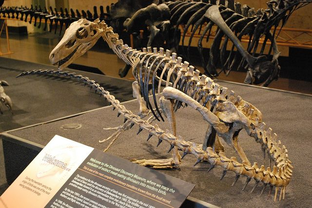 Herrerasaurus Facts Habitat Diet Fossils Pictures